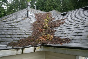 Poorly Maintained Roof